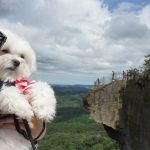 千葉・館山犬連れ観光ドライブ!!絶景鋸山を愛犬エマとプチ登山