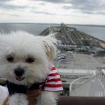 千葉犬連れ観光ドライブ!!東京湾アクアライン「海ほたる」にて愛犬エマと絶景海上散歩
