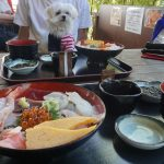 館山犬連れ旅行!!「漁師料理たてやま」で愛犬エマと絶品海鮮丼ランチ