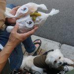 愛犬エマとの犬連れ代々木散歩!!奥渋(奥渋谷)の「Camelback sandwich&espresso」でカフェタイム