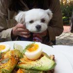 愛犬エマとの湘南ドライブ!!鎌倉「GARDEN HOUSE(ガーデンハウス)」のテラス席で犬連れカフェレストランモーニング