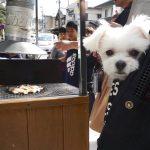 鎌倉観光!!犬連れお出かけで小町通り食べ歩き
