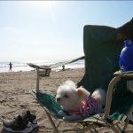 愛犬エマとの湘南鎌倉犬連れ観光~由比ヶ浜の浜辺でゆっくりと過ごす