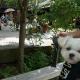 軽井沢おしゃれエリア「ハルニレテラス」を愛犬エマと犬連れ観光散策。#犬連れ軽井沢旅行