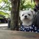 軽井沢で愛犬エマとモーニング(朝食)「ベーカリー&レストラン沢村」(犬連れペット可・テラス席)