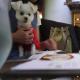 軽井沢「ELOISE's Café(エロイーズ カフェ)」にて愛犬エマと森の中の避暑地モーニング(朝食)(犬連れペット可・テラス席)